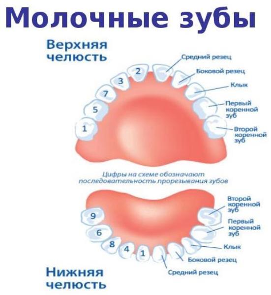 Последовательность прорезывания зубов